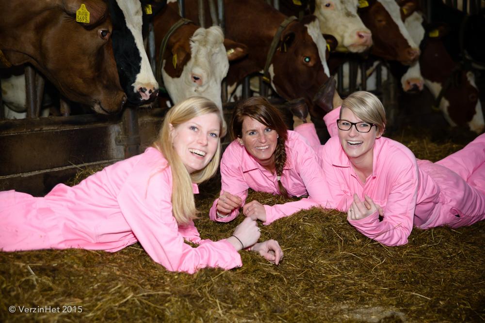 fotoshoot tussen de koeien