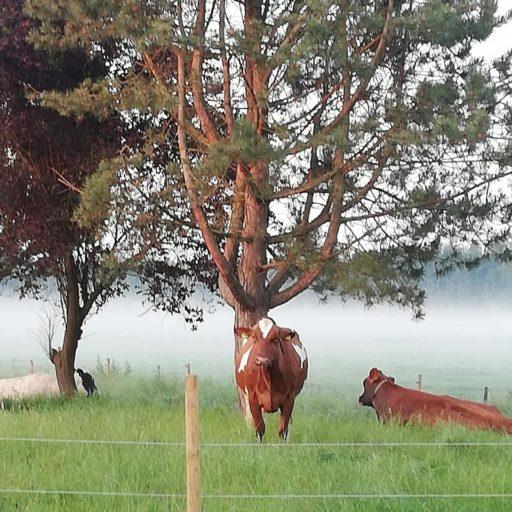 fotoshoot op de boerderij, koe knuffelen, landelijke wonen, buitenleven,