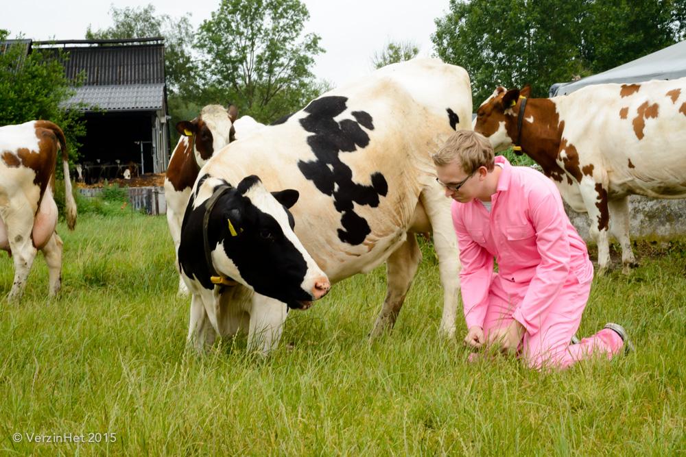 Fotoshoot en Koeien knuffelen.