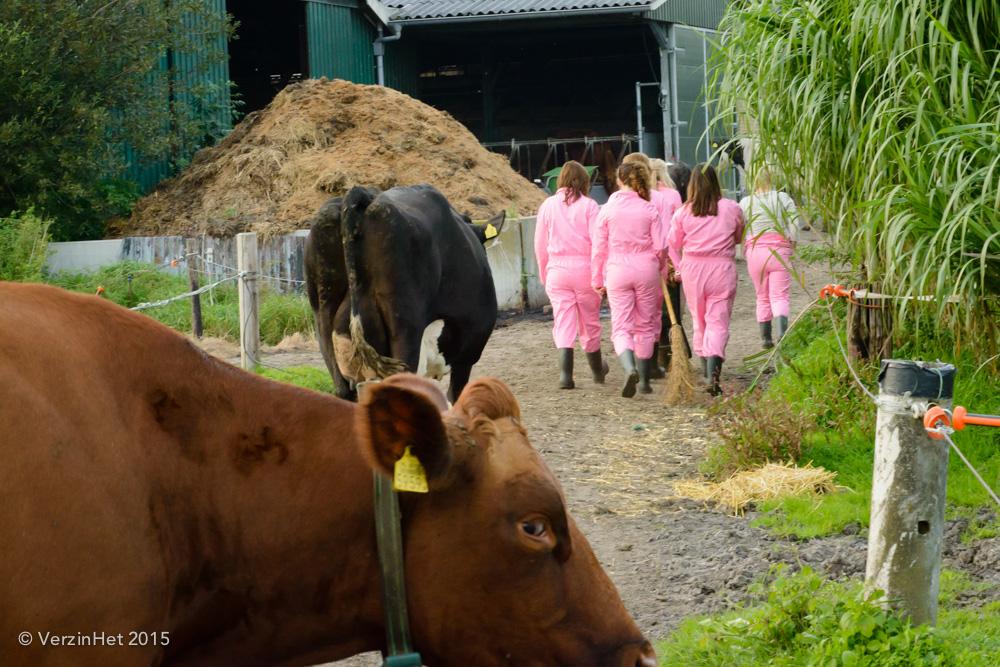 fotoshoot op de boerderij tussen de koeien