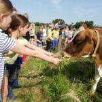 Kom kijken op de boerderij, bij de koeien en kalfjes met een boerderij les. Onderwijs op de boerderij!